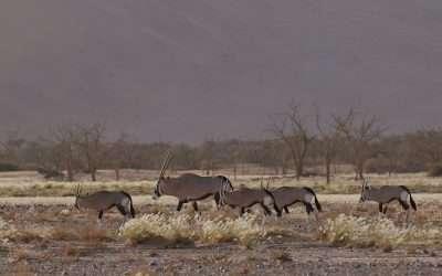 Shooting in Namibia's stunning sand dunes – DP/director Sean Viljoen's first look at the Blackmagic's Pocket Cinema Camera 6K Pro