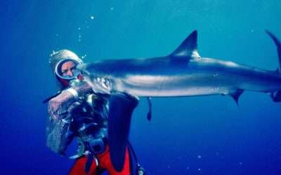 Hundreds of hours of underwater footage digitised with Cintel scanner for Playing With Sharks
